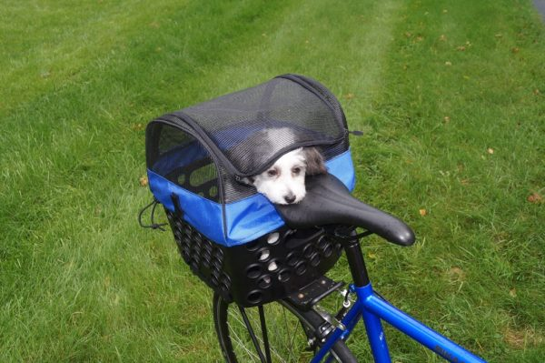 DairMan pet carrier with puppy